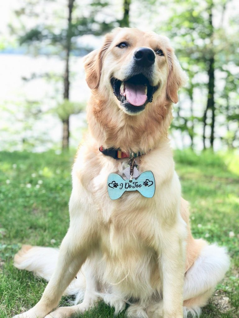I Do Too Dog Wedding Tag, Wedding Dog Accessories, Personalized Wedding Bow Tie Dog Tag, Wedding Dog Gift Ideas, Gift for Dog for Wedding